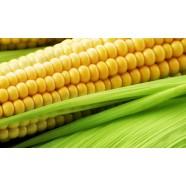 Насіння кукурудзи Золотий Качан, 20г