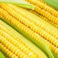 Насіння кукурудзи Мрія Гурмана, 20г