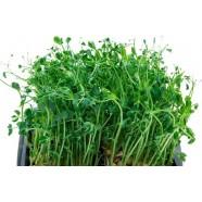 Семена микрозелени Горох, 20г
