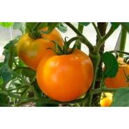 Насіння томату Апельсин, 2г