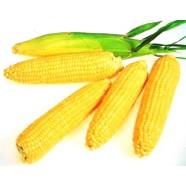 Насіння кукурудзи цукрова Леженд F1, (Голландія), 0,25 кг