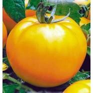 Насіння томату Апельсин (Польща), 0,1 кг