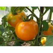 Насіння томату Хурма (Польща), 0,1 кг