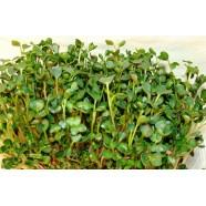Насіння мікрозелень Рукола, 0,1 кг