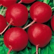 Насіння редиски Червоний Куля (Італія), 1200 насіння.