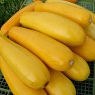 Семена цукини Желтоплодный F1, (Россия), 0,5кг