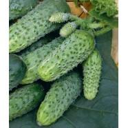 Семена огурца партенокарпический Теща F1 (Китай), 100 г