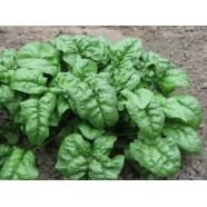 Семена шпината Фантазия, (Украина), 0,25кг