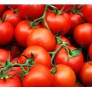 Насіння томату Терра Кота F1, 1 000 шт.