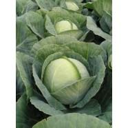 Семена капусты б/к Томас F1, 2 500 шт.