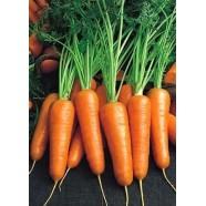 Семена моркови Роял Шансон, 500 гр., банка