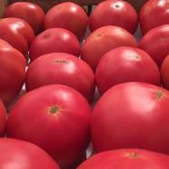 Насіння томату Розализа F1, детермінантний, 1000шт.