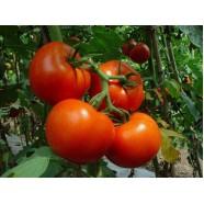 Насіння томату Барибин F1, індетермінантний, 500 шт.