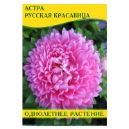 Астра Русская Красавица, 50 г