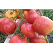 Семена томата Бабушкин Секрет красный, 50гр.
