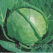 Семена капусты Каменная Голова, 0,5 кг