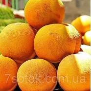 Насіння Дині Медова Казка, (Росія), 0,5 кг