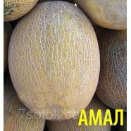 Насіння дині Амал, 0,5 кг