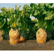 Семена свеклы, кормовая Урсус Поли желтый, 1кг