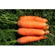 Насіння Моркви Нантська Солодка, (Німеччина), 0,5 кг