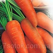 Семена моркови Шантане Сквирская, 1кг