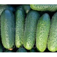Семена огурца Полан F1, 0,5кг