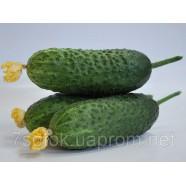 Насіння огірка Кибрия F1, 1000 насіння