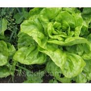 Насіння салату Берлінський Жовтий, 0,5 кг