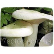Мицелий гриба Груздь Настоящий, 10г
