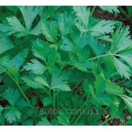 Семена петрушки Богатырь листовая, 0,5кг
