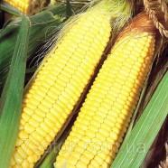 Семена кукурузы Попкорн Белый, 1кг
