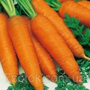 Насіння Моркви Рідко F1, 100 000 насінин