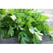 Семена петрушки Фестиваль листвовая, 0,5кг