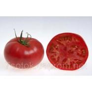 Насіння томату Шеди Леді F1, 1000 насіння