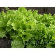 Насіння салату Одеський Кучерявиц, 100г