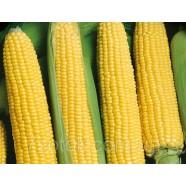 Семена кукурузы Брусница, 100г