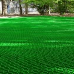 Насіння газонної трави