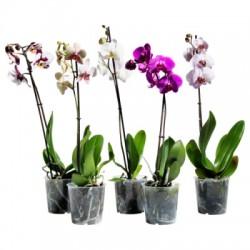 Все для орхідеї