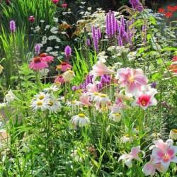 Професійні насіння Квітів