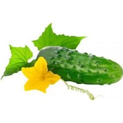 Професійні насіння Огірка