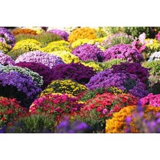 Семена пакетированные Цветов
