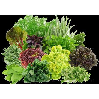 Семена пакетированные Салата, Зелени, Пряных трав