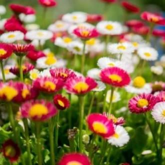 Насіння квітів. Велика фасовка.