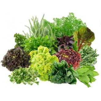 Професійні насіння салату, зелені, пряних трав у банках