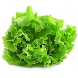 Профессиональные семена салата, зелени, пряных трав.