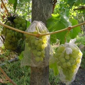 Сітки для захисту винограду від ос і птахів