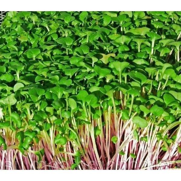 Насіння мікрозелені Капуста Мікс, 10г