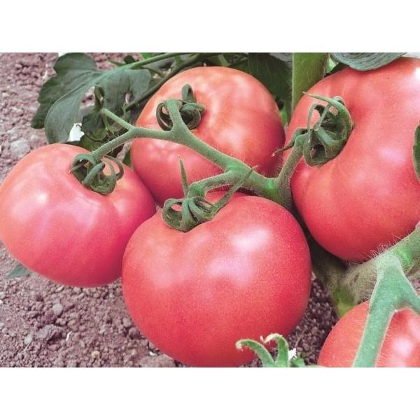 Насіння томату Малиновий Дзвін, (Росія), 0,2 кг