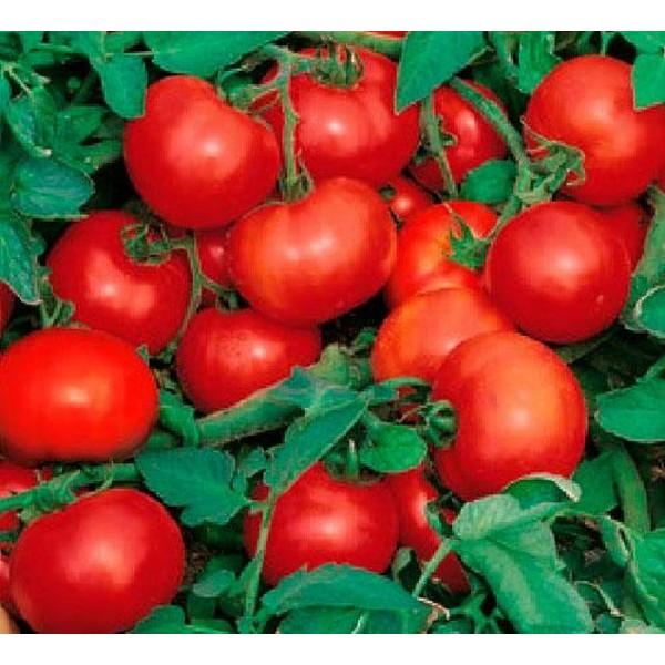 Насіння томату Ефімер, 3г