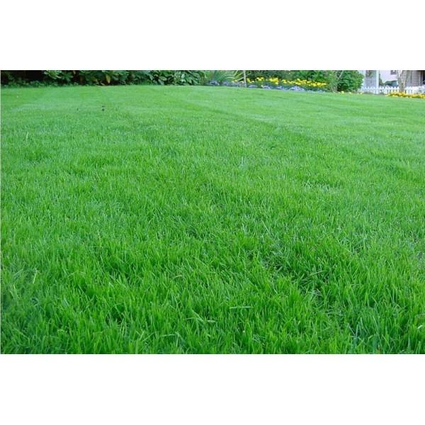 Насіння газонної трави Універсальна, 100 г
